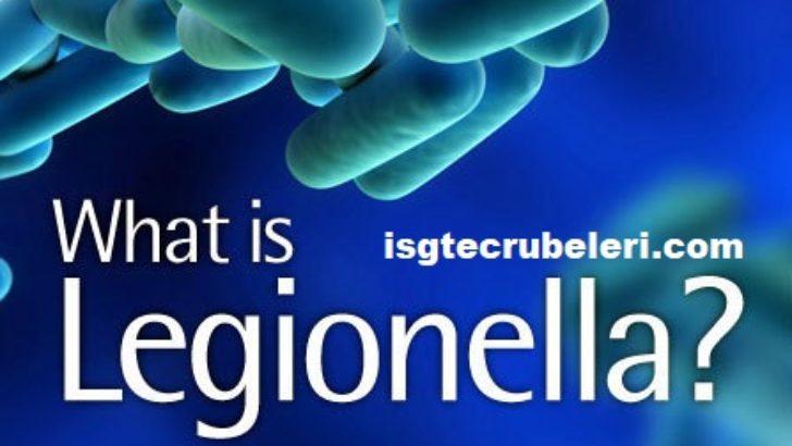 Legionella bakterileri nedir